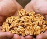 Врачи сказали, что орехи-это must мужчин