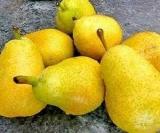 Носят фрукты, которые помогают при опасных хронических нарушений